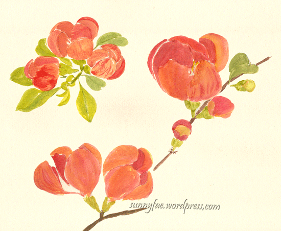 quince flower watercolour sketch