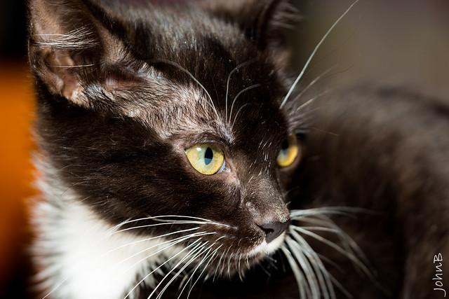 Whiskers (Explore April 12, 2021)