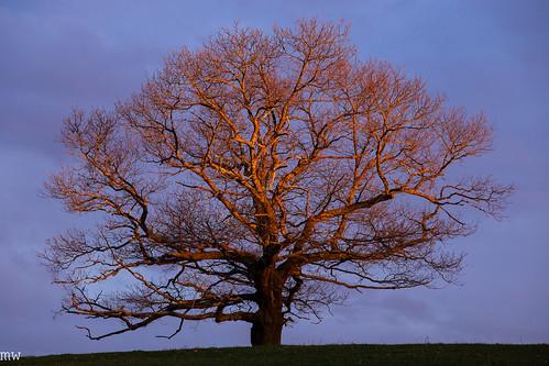 gibbet hill tree groton sunrise massachusetts new england
