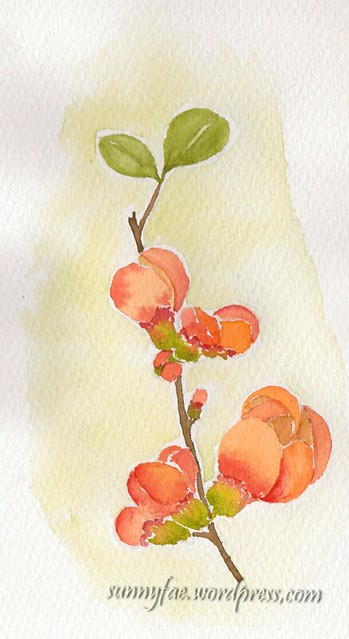 quince flowers watercolour