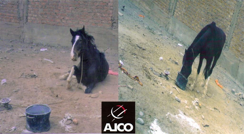 Caballo explotado en circo de Lima-2005.