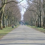 Tree lined Haslam Park