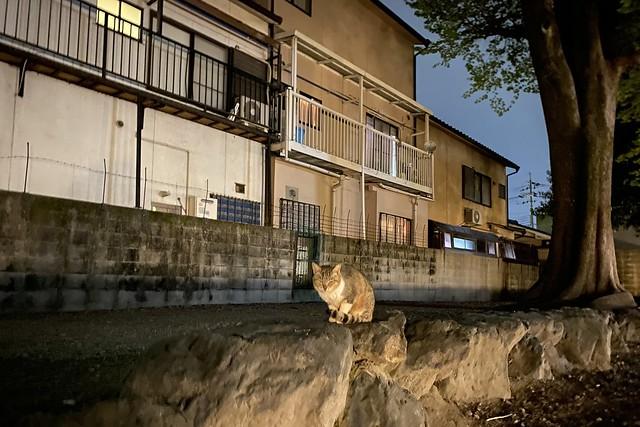 Today's Cat@2021−04−12