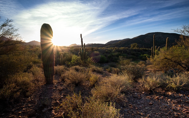 Good SUNday! Always beautiful Sonoran Desert