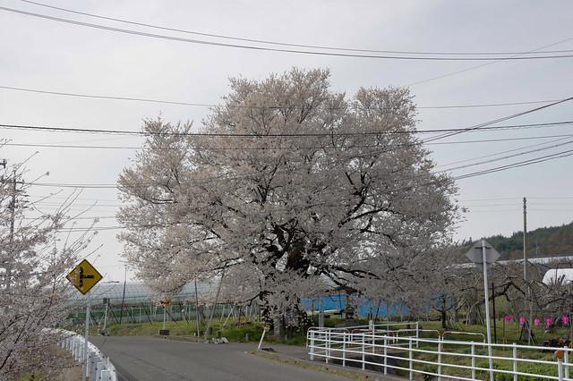 山ノ内町 21.04.12