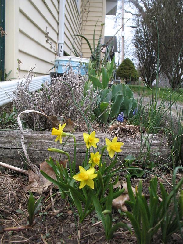 Spring blooms begin