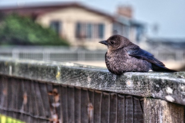 Resting On A Fence