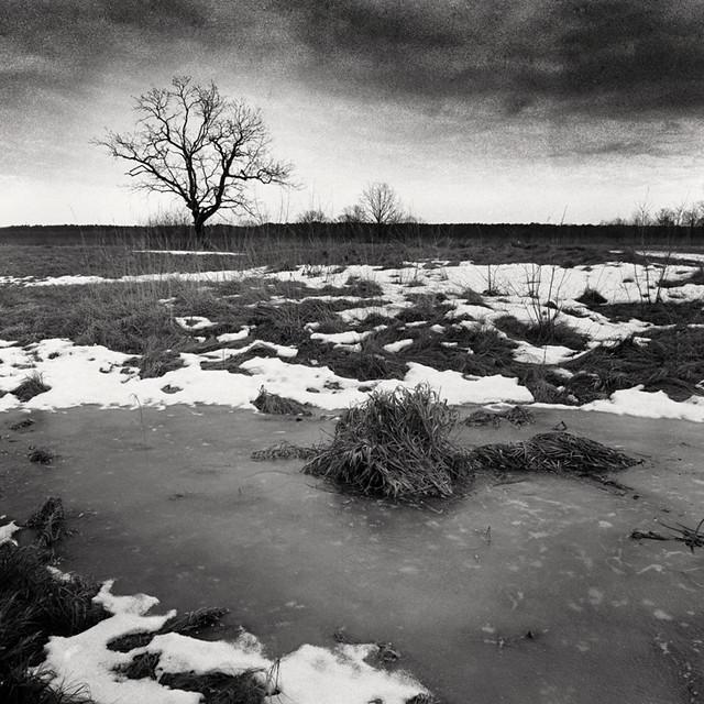 Oak in the river floodplain, Homeĺskae Palesse, Belarus, spring. 2021