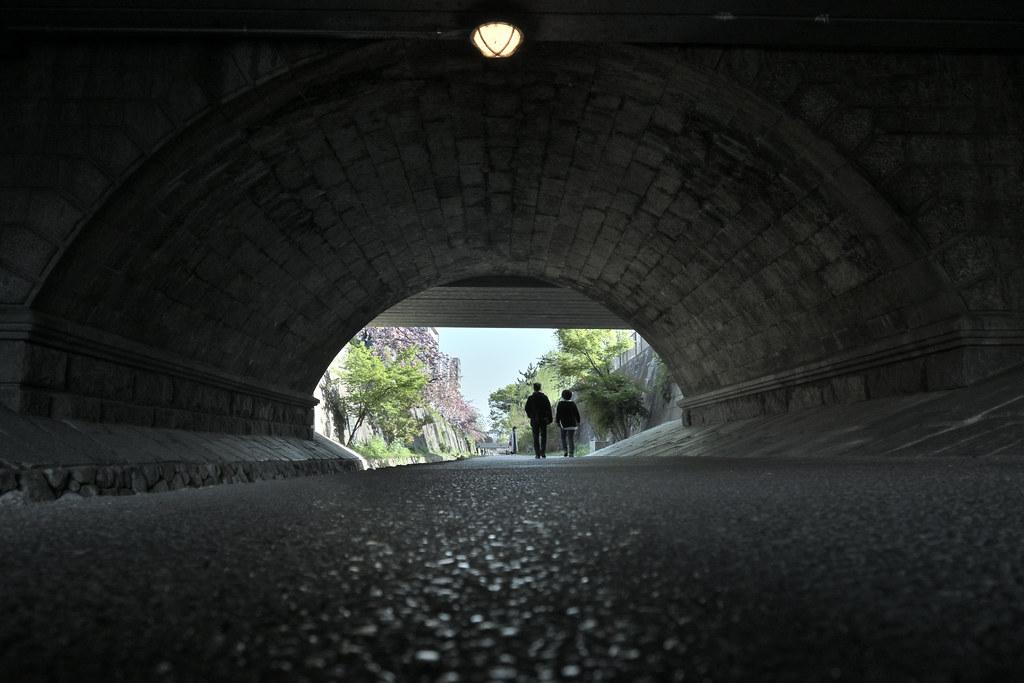 堀川遊歩道の桜並木 3