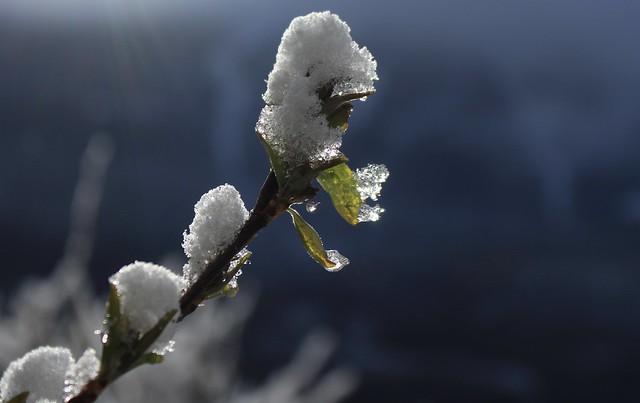 Hésitation saisonnière