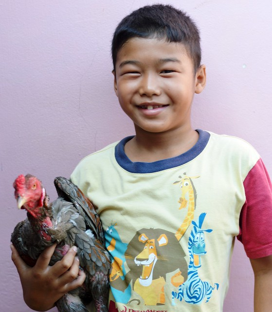 a boy and his fighting cock