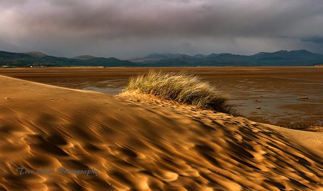 Beyond the dunes.