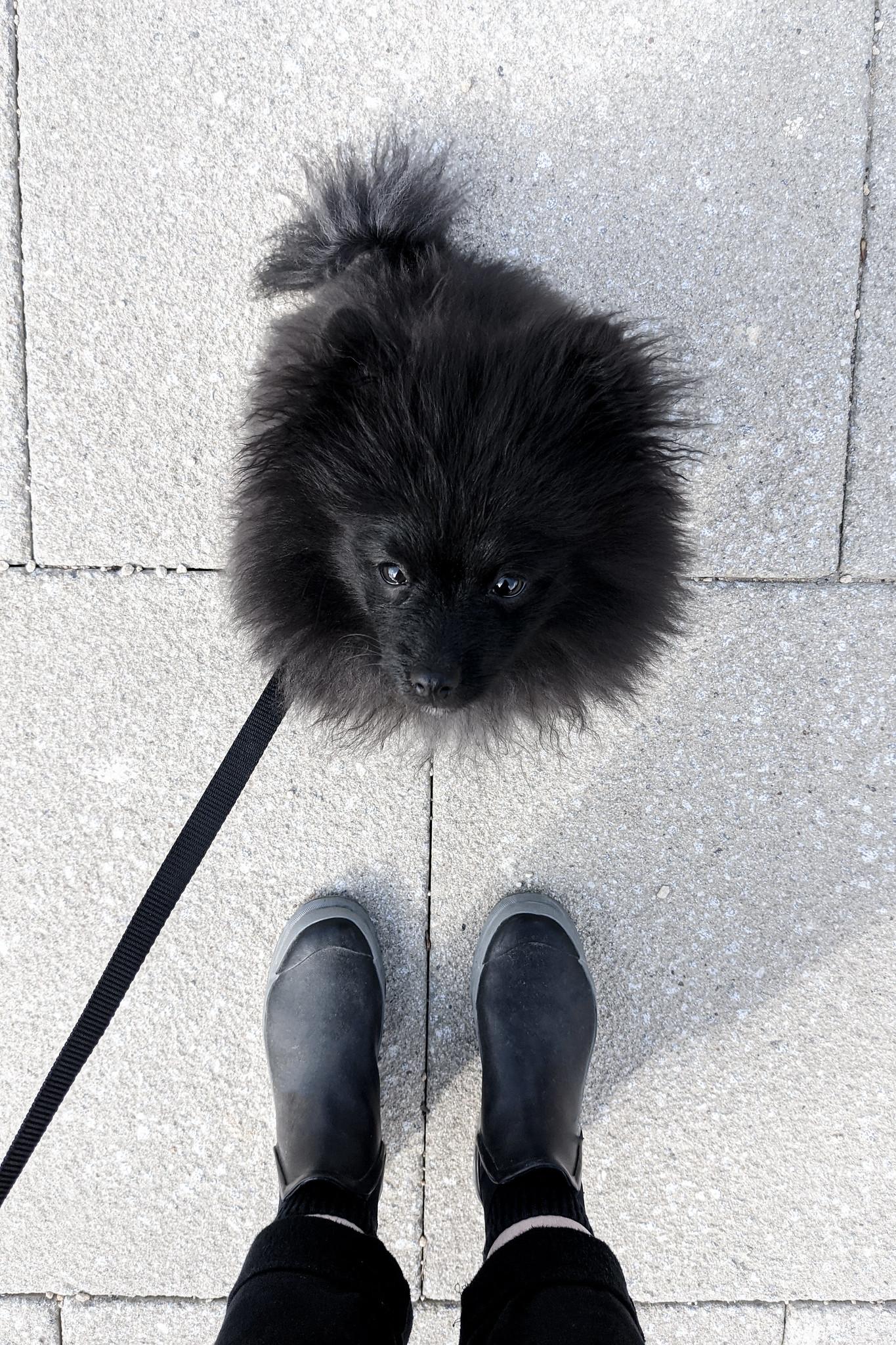 A Dog Walkers Capsule Wardrobe