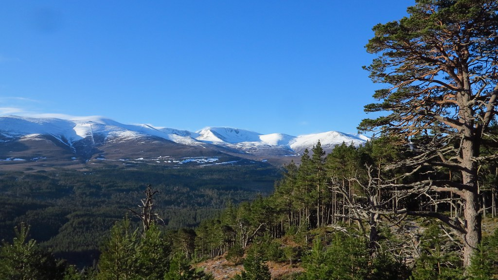 Cairngorms IMG_7719