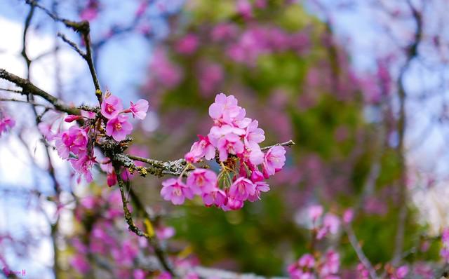 9615 - Flowers