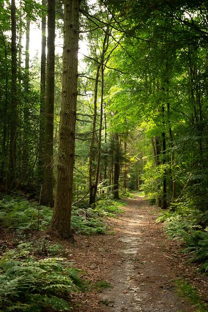 Pretty Corner Woods [Explored]