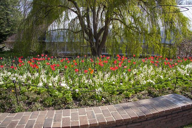 Brookside Gardens 6 Apr 2021   (142)