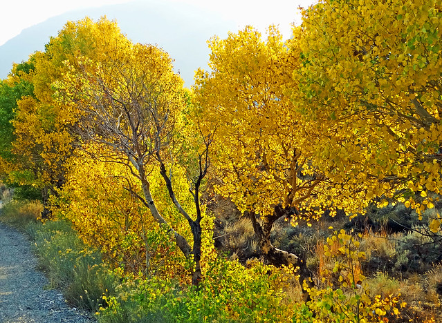 When Autumn Sparkles, June Lake, CA 2020