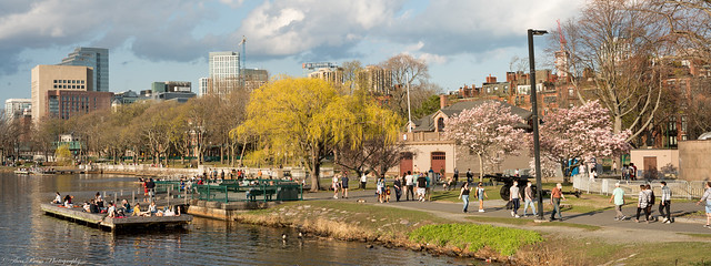 The throng of visitors at the Boston's Esplanade Park