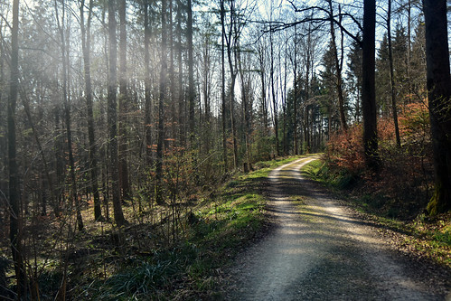 Beautiful path through the forest