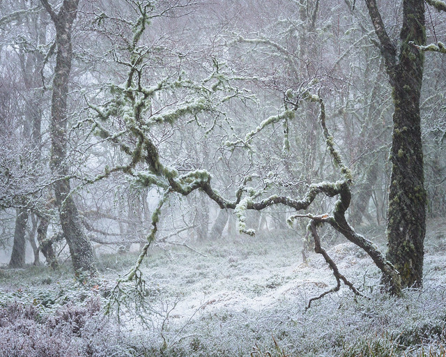 Reaching Out in a 'Winter' Woodland