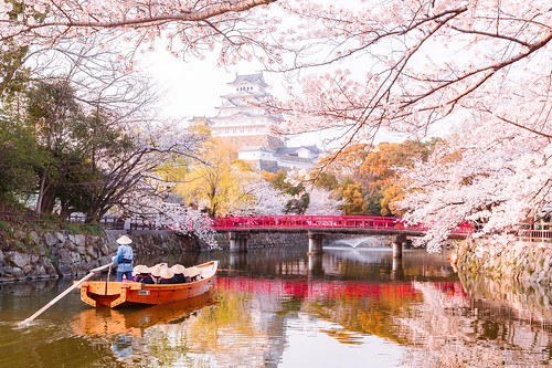 Himeji Castle in Japan during Cherry Blossom season