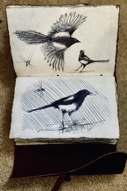 New sketch book, 2021. Ballpoint pen drawing by jmsw on recycled card. Magpies.