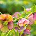 Macro Flower_00250
