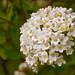 Macro Flower_00257