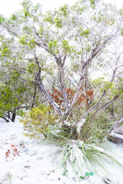 SnowStorm_155
