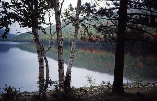 New England Woods (2)
