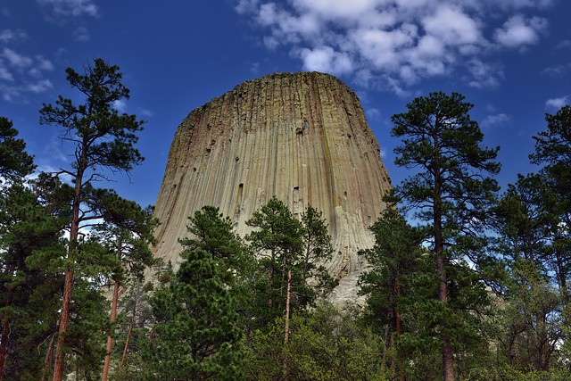 Devil's Tower Rising Above A Forest of Evergreens (Devils Tower National Monument)
