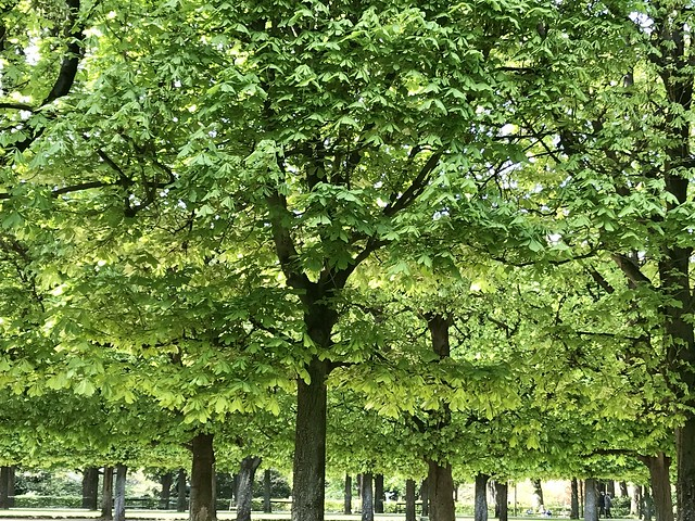 Only green... in Paris !😉