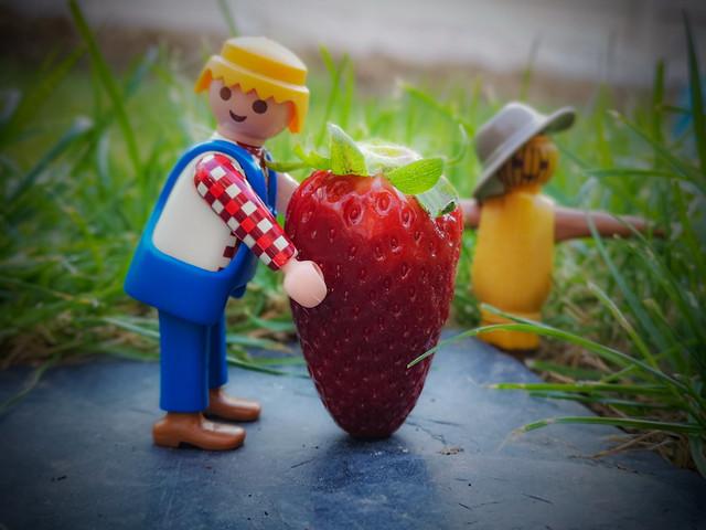 Ramènes ta fraise !