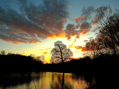 Sunset @the Park by Carol aka 奇芍