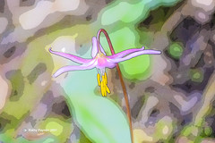 Fawn Lilly 3282