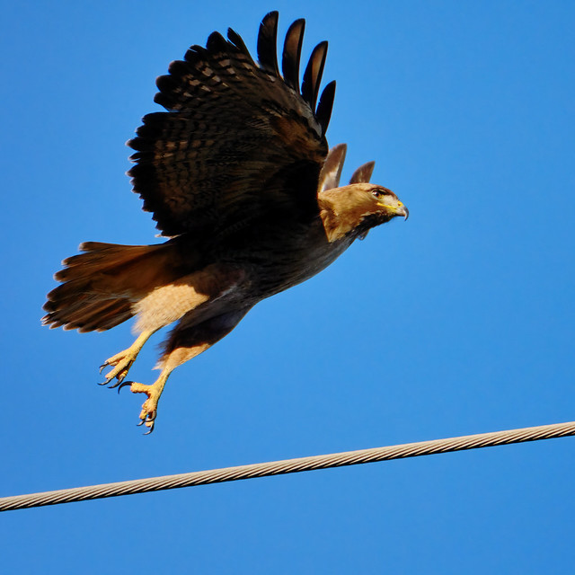 Taking off from a wire