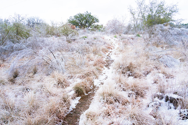 SnowStorm_156