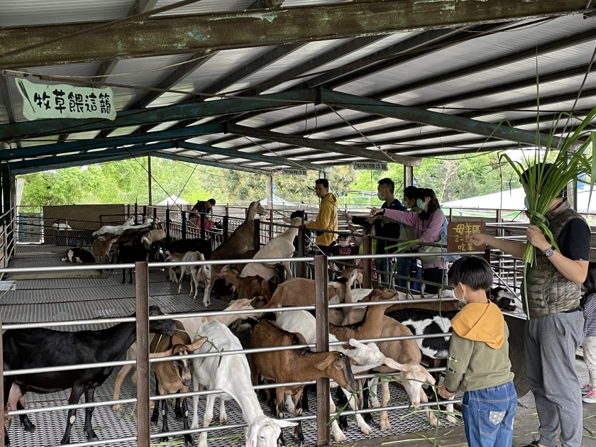宜蘭,宜蘭景點,宜蘭親子景點,宜蘭農場,宜蘭宜農牧羊場,餵動物,宜蘭好玩景點,宜農牧場住址,宜農牧場營業時間,宜農牧場門票,宜農牧羊場好玩嗎,親子景點,親子農場,適合孩子的農場,宜蘭冬山,宜農牧場評價,宜農牧場擠羊奶,宜蘭親子DIY,宜農牧場宜蘭