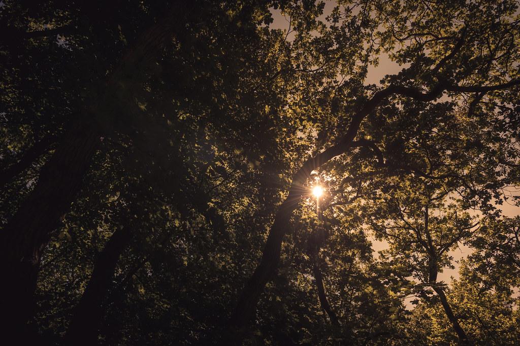 Light & Shadows, Schoorlse Duinen, The Netherlands.