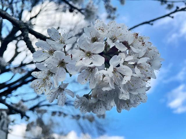 a beautiful spring morning