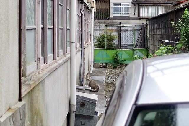 Today's Cat@2021−04−13