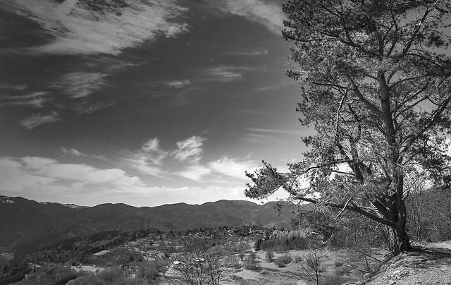 L'arbre avec vue