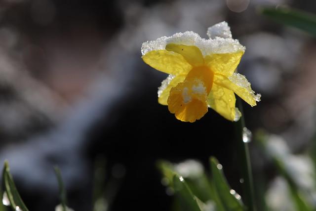 Wet Spring Flower