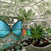 The Butterfly Conservatory  2021 - Crafted Flutterbies on the Conservatory Path