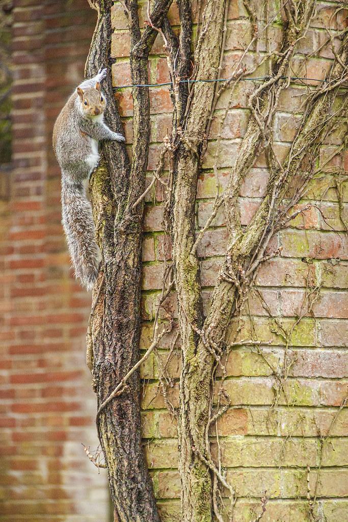 20210412_F0001: Ninja squirrel posing for a shot