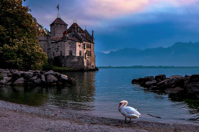Château de Chillon et son cygne