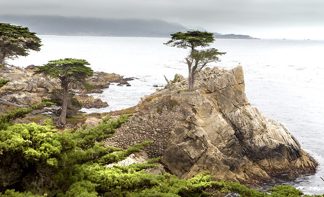 The lone Cypress [Monterey-Californië]