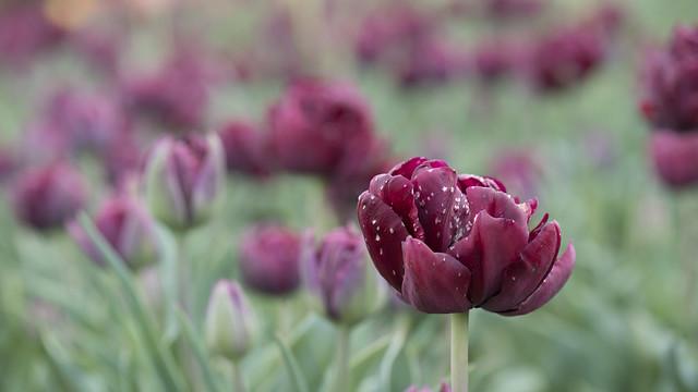Le mal des fleurs
