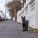 Cat somewhere in Reykjavik